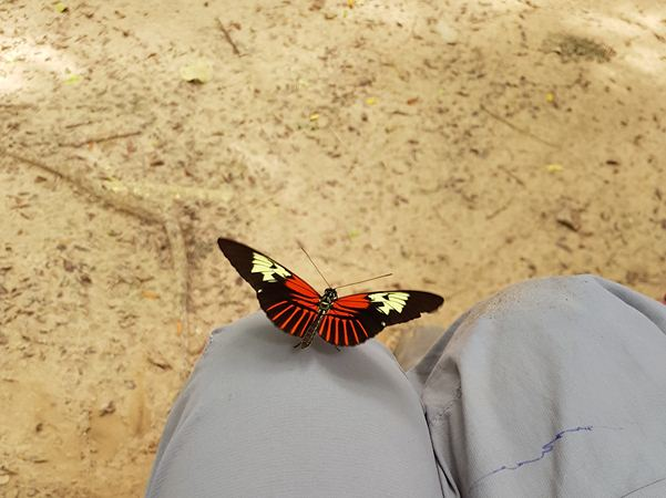 Gigant and colorful butterfly