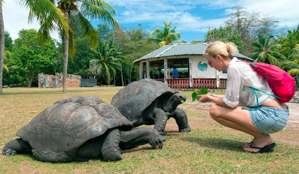 5 Galapagos Animals You Should Know About