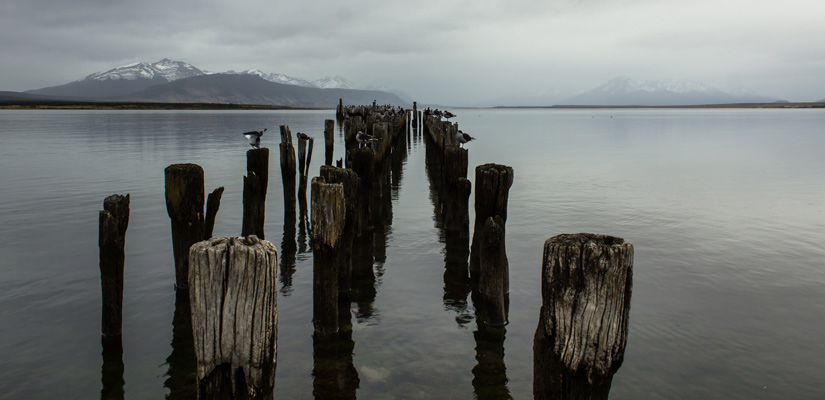 woods in puerto natales