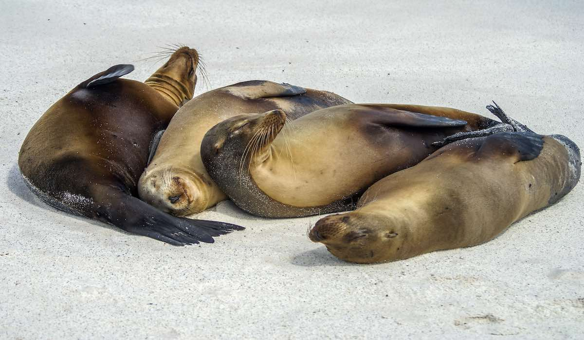 seals: things to do in Galapagos Islands