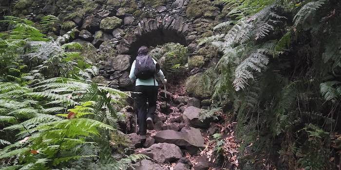 Traveler in the Enchanted Forest La Palma