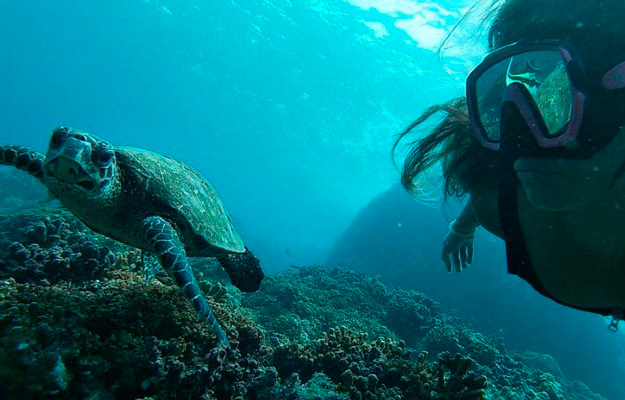 Snorkeling in Cano Island with a turtle