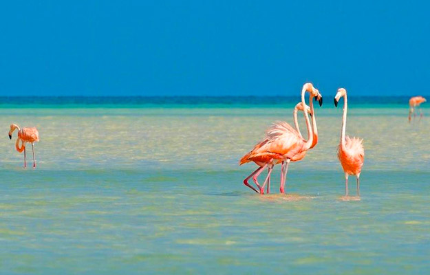 Pink flamingos in Passion Island