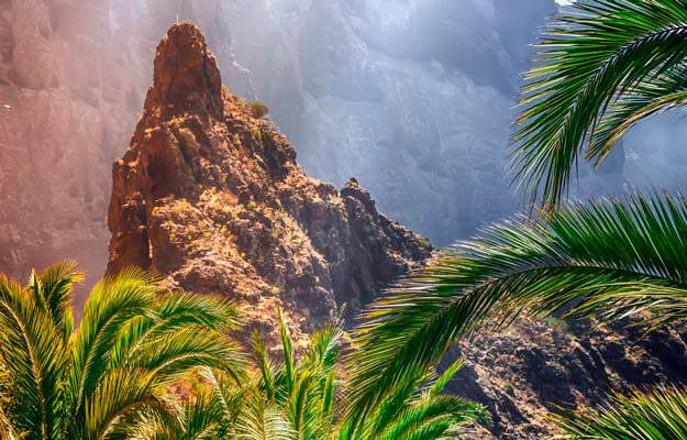 Masca forest in Tenerife
